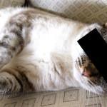 Undercover_cat